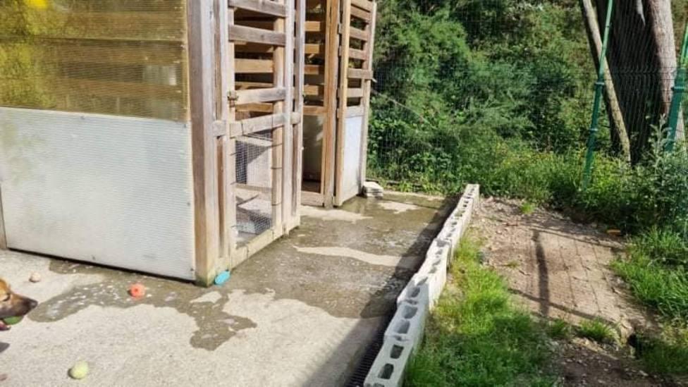 Instalaciones de la Protectora de animales de Burela