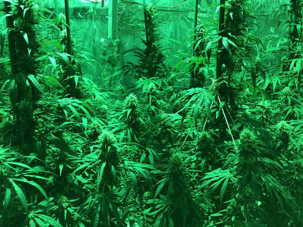 cultivo indoor Arnedo 1