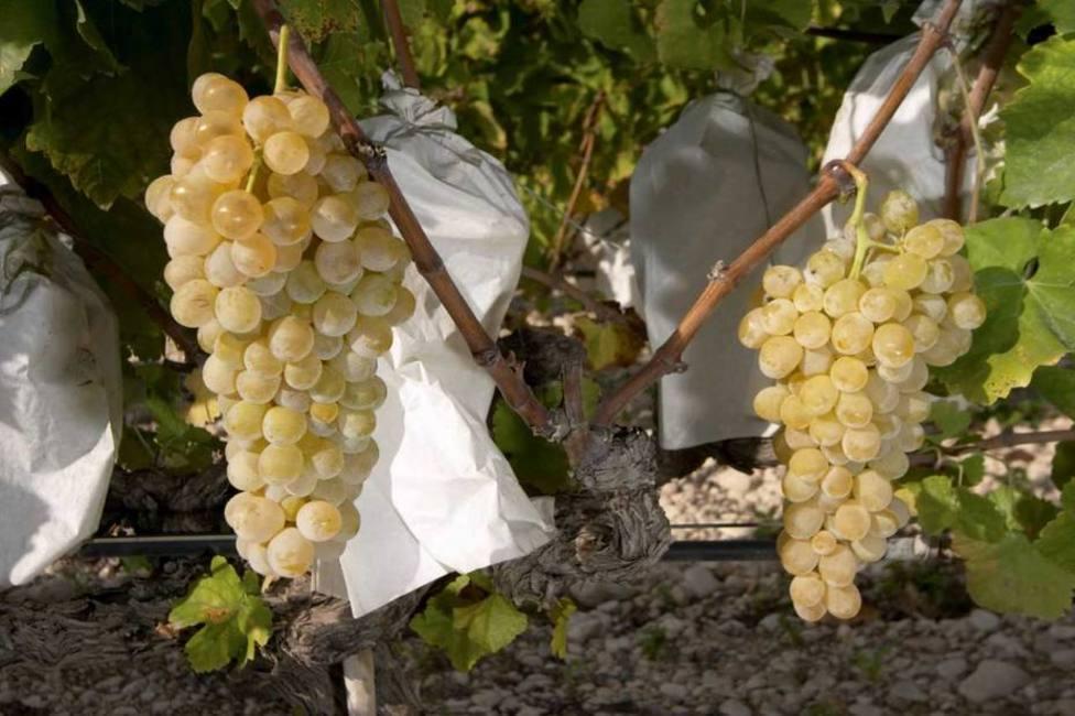 Mazón critica al Gobierno por dejar a la uva de mesa fuera de la reducción de impuestos