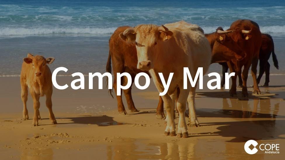 El sacrificado oficio de las rederas en Campo y Mar