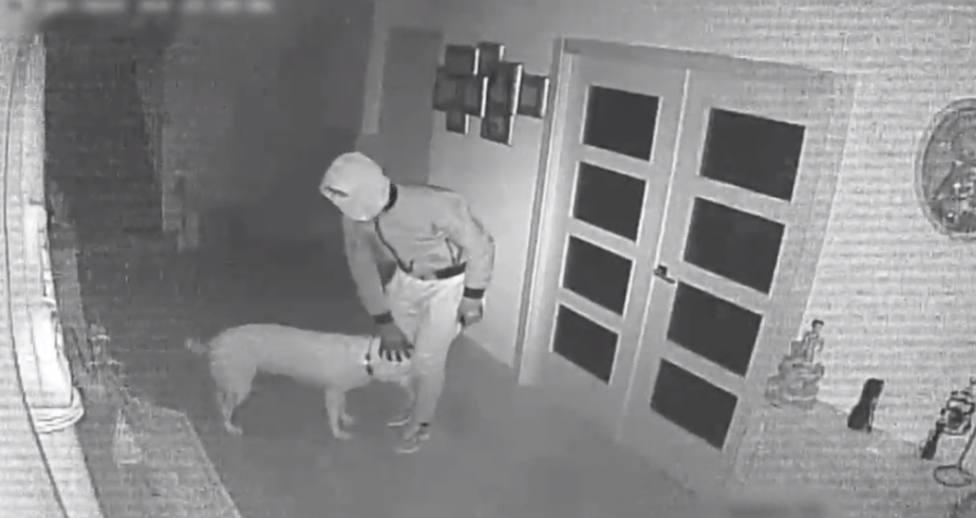 Los ladrones amigos de los perros en Galicia