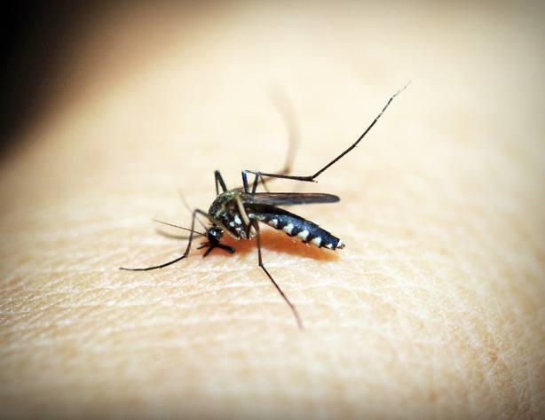 El dengue avanza en España