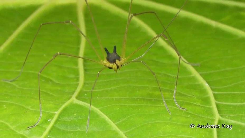 """La alarmante """"araña"""" con cabeza de perro encontrada en la selva"""