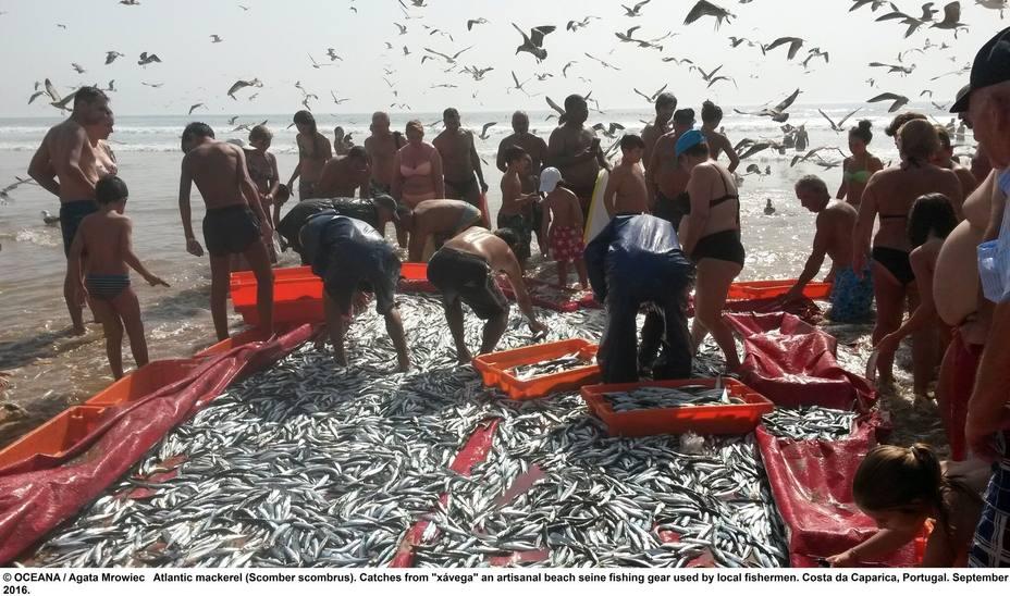 Oceana advierte al Parlamento europeo de que los cierres de emergencia de las pesquerías son la solución a la sobrepesca