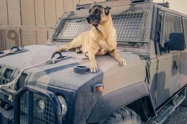 ctv-ope-cane-soldati