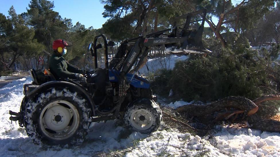 Los Operarios de Madrid retiran los árboles caídos en la Casa de Campo