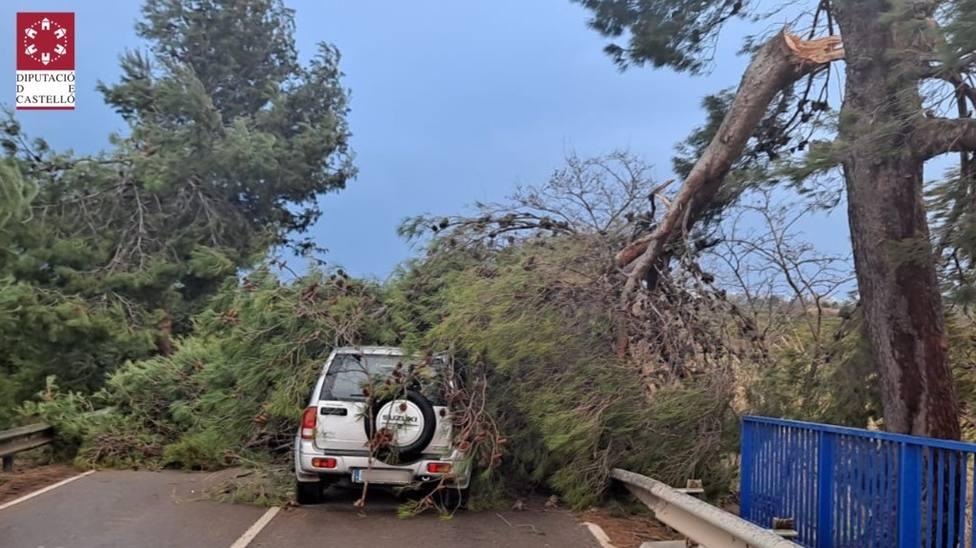El viento ha hecho caer un pino sobre un vehículo cuya conductora ha salido ilesa en Nules