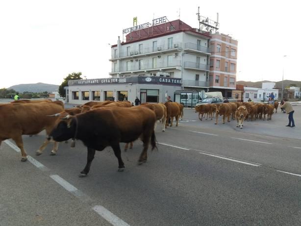 Vacas Nacional
