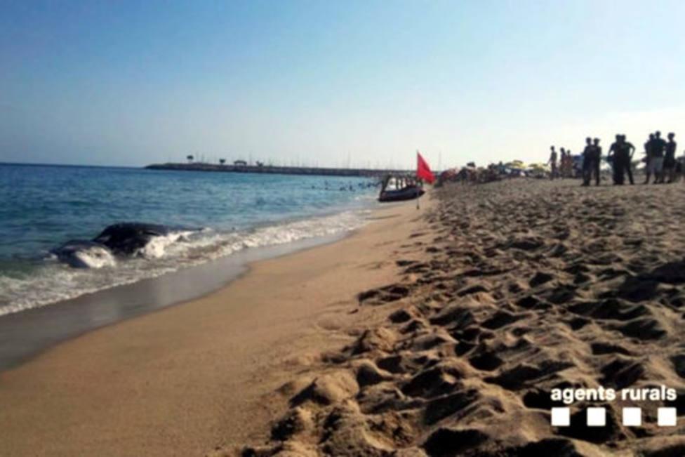 Cachalote hallado en la playa de Mataró