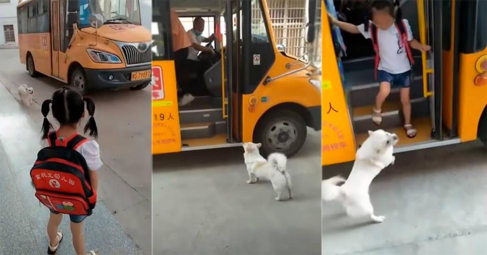 Un perro persigue todos los días al autobús y la verdadera razón rompe el corazón de todos