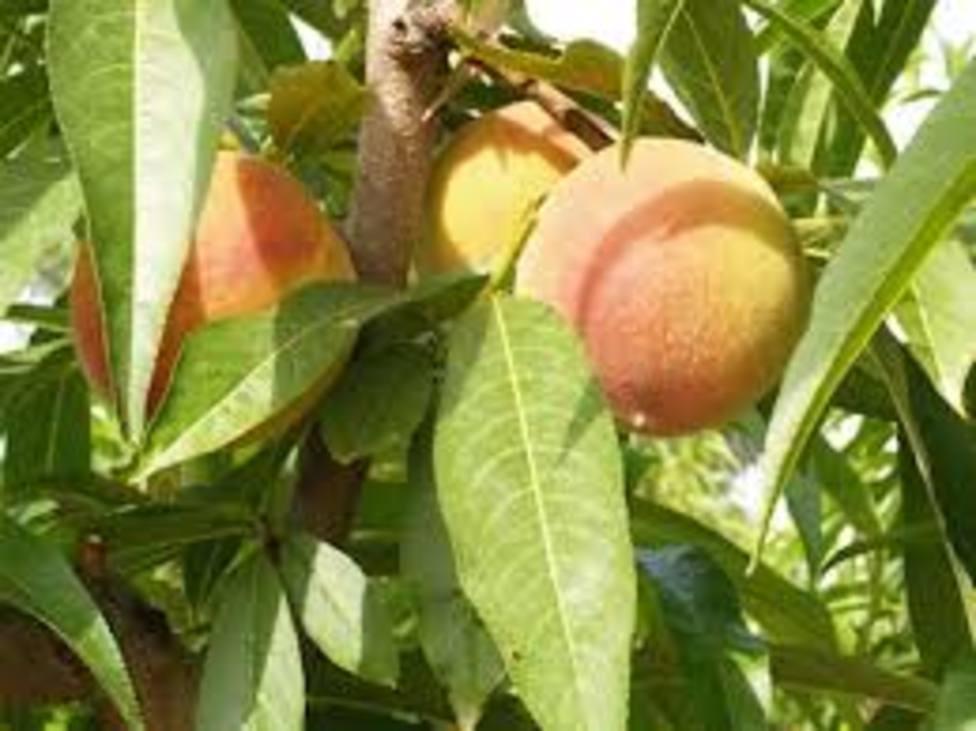 Fruta en campo