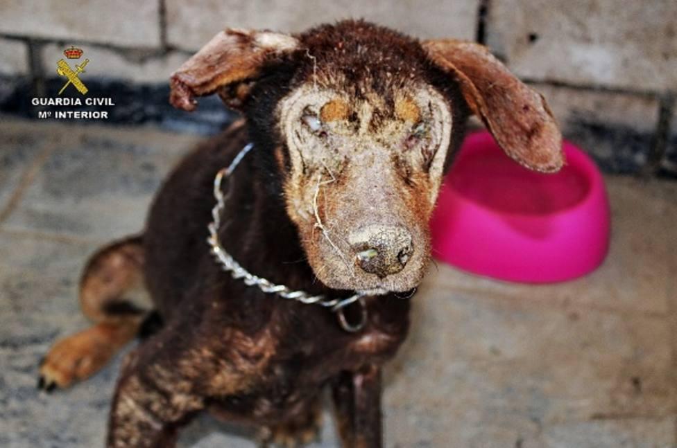 La Guardia Civil interviene en una finca 22 perros en condiciones deplorables y encuentra restos cadavéricos d