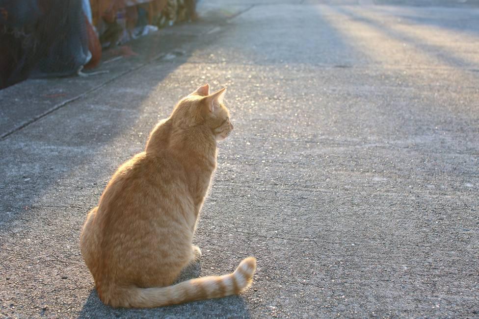 ctv-ixd-cat-5690461 1920