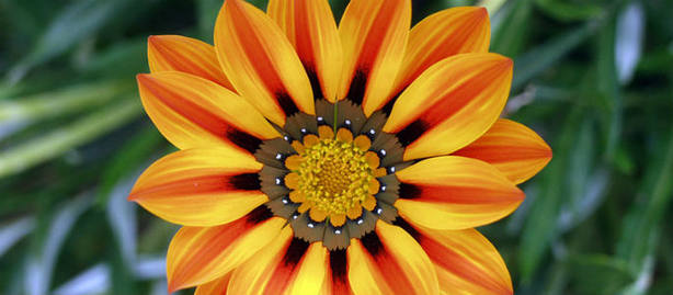 Las Flores Tambien Se Comen Actualidad Cope