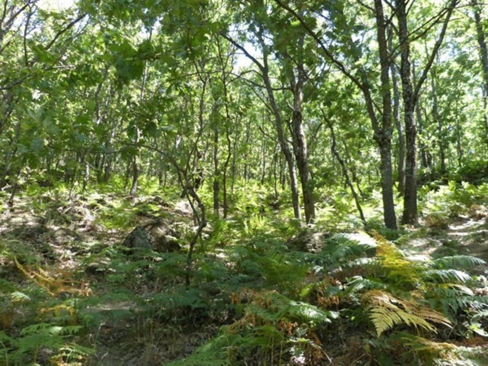 Cercados en un bosque de Bizkaia tres miembros de la banda del Kay implicados en asaltos en La Rioja