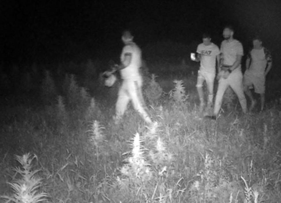 La Guardia Civil detiene a dos jóvenes por la sustracción de cáñamo industrial en Caravaca