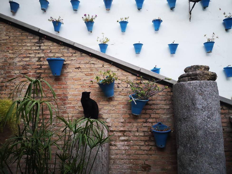 La UCO prevé que hasta finales de 2021 o principios de 2022 no se recupere el sector turístico en Córdoba