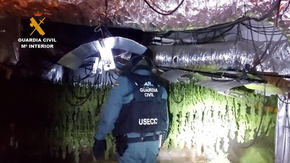 La Guardia Civil ha desarticulado un grupo familiar dedicado al cultivo y producción de marihuana en Torrejón del Rey.