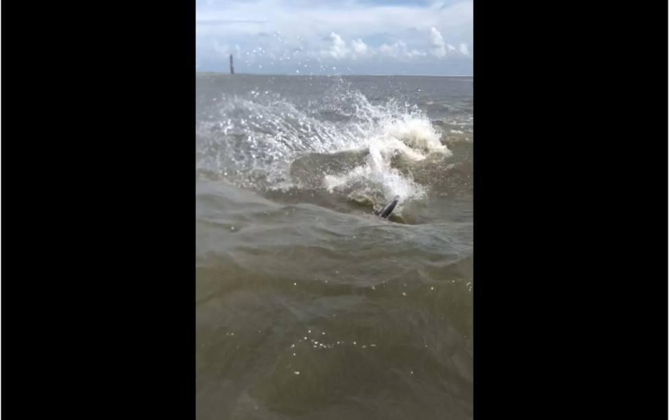El susto que se llevaron 2 cámaras que filmaban en el mar al ver cómo se acercaban dos aletas de tiburón