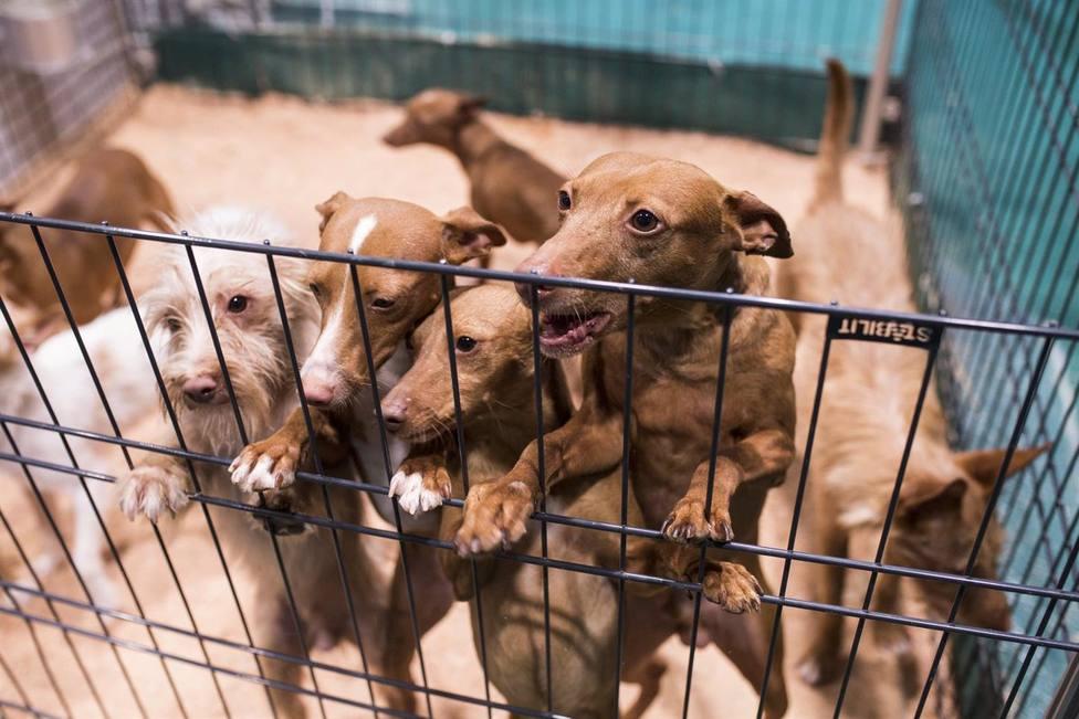 Investigan a un hombre de Olot por maltrato animal
