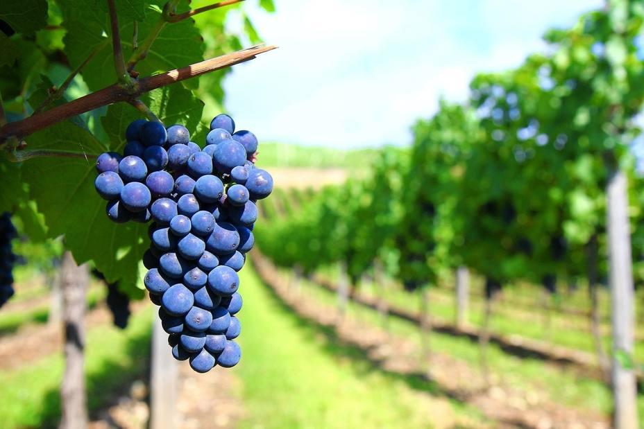 Fepex cree que la exportación de uva de mesa a China es una oportunidad única para diversificar mercados