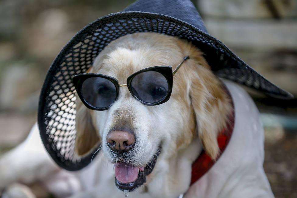 La solución si tu perro se insola