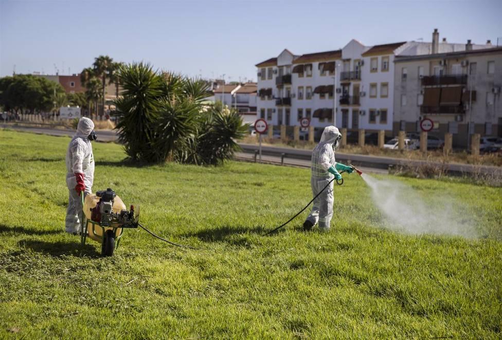Continúan las labores de fumigación contra los mosquitos causantes del virus del Nilo en Coria del Río