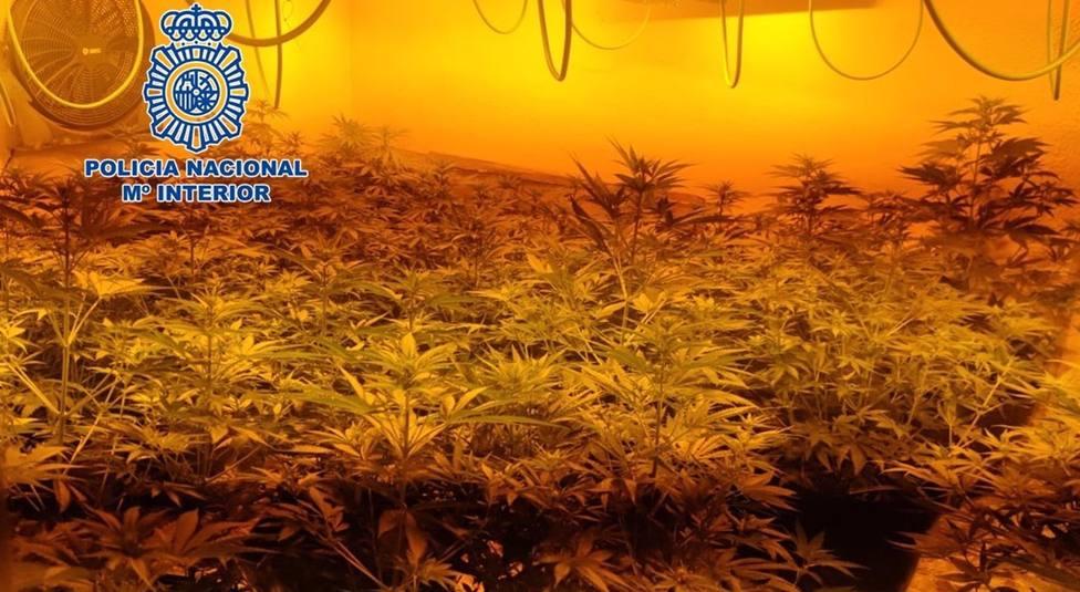 Granada.- Sucesos.- Incautadas cerca de 2.900 plantas de marihuana ocultas en seis viviendas adosadas en Cartuja