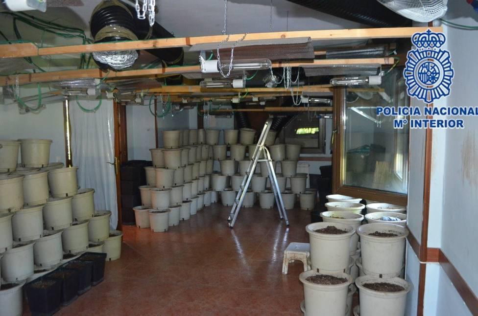 Así era la plantación de marihuana que ha desmantelado la policía en Gijón
