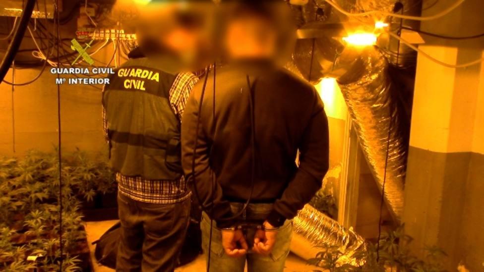 Cae una banda de narcos que tenía una gran plantación de marihuana en Guadarrama