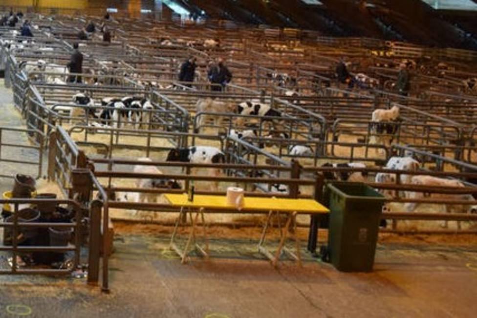 Retoma su actividad el mercado nacional de ganado de Castro
