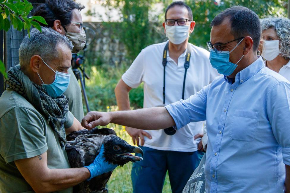 La Junta concluye la campaña de suelta dequebrantahuesos con ocho ejemplares liberados en Jaén y Granada