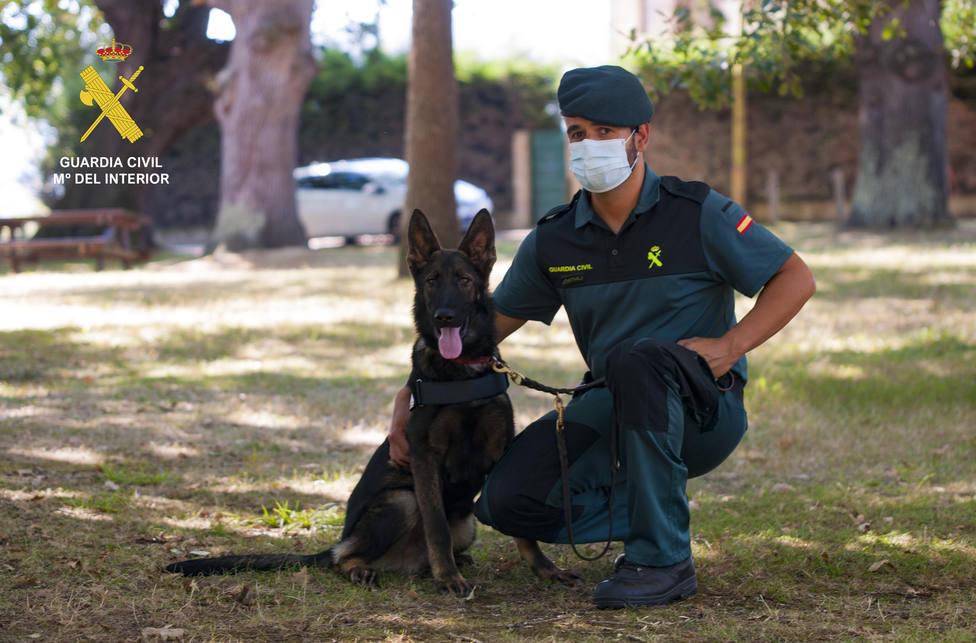 Foto Urko (Cachorro pastor alemán Guardia Civil)