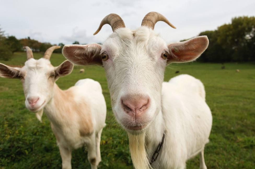 ctv-x9a-cabras