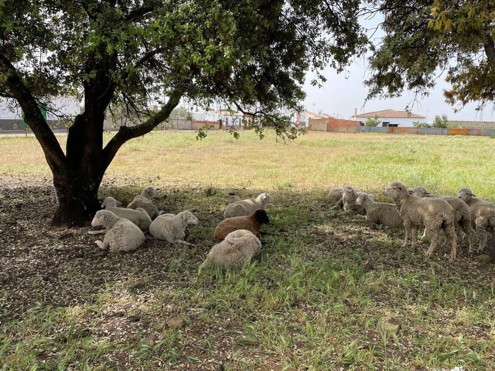 Expuestos sobre la mesa las demandas del sector agrícola, ganadero, forestal y cinegético