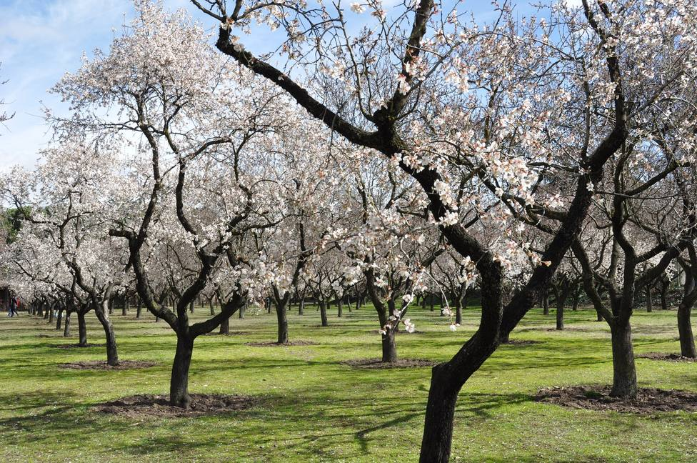 ctv-4ao-almond-trees-680725 1920