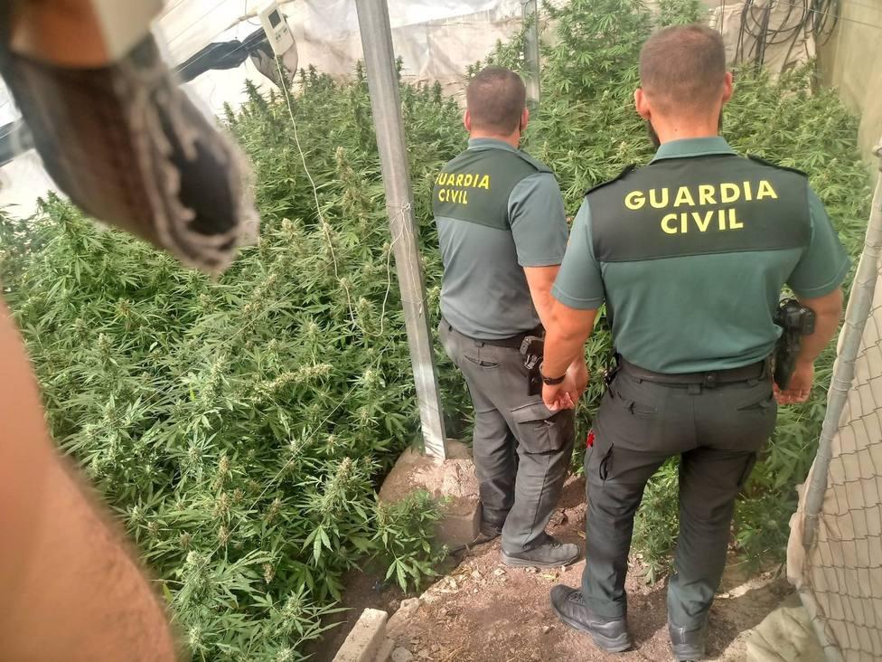 Granada.- Sucesos.- Intervenidas casi 1.900 plantas de marihuana en varios operaciones con 14 investigados