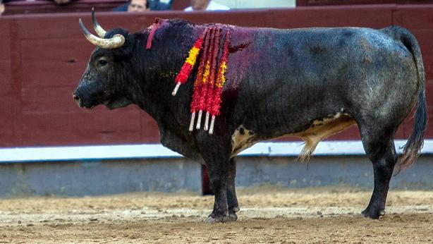 Uno de los toros de La Quinta lidiados este miércoles en Las Ventas