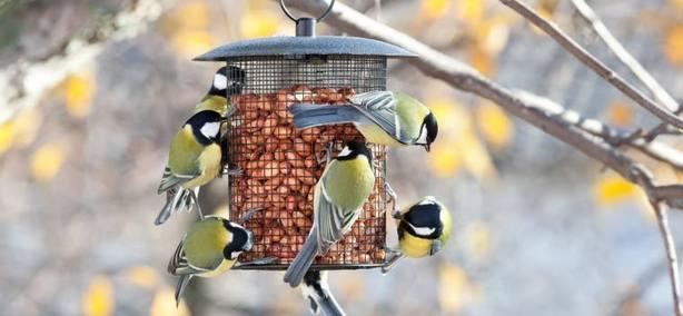 SEO/BirdLife lanza un concurso para animar a los ciudadanos a poner comederos para las aves en su terraza o jardín