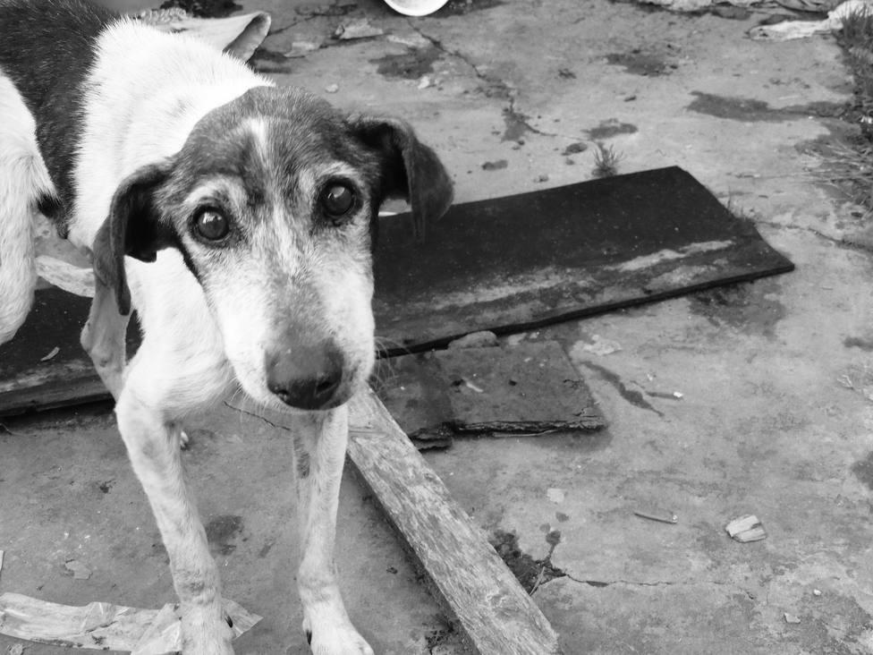 Foto de archivo de un perro abandonado