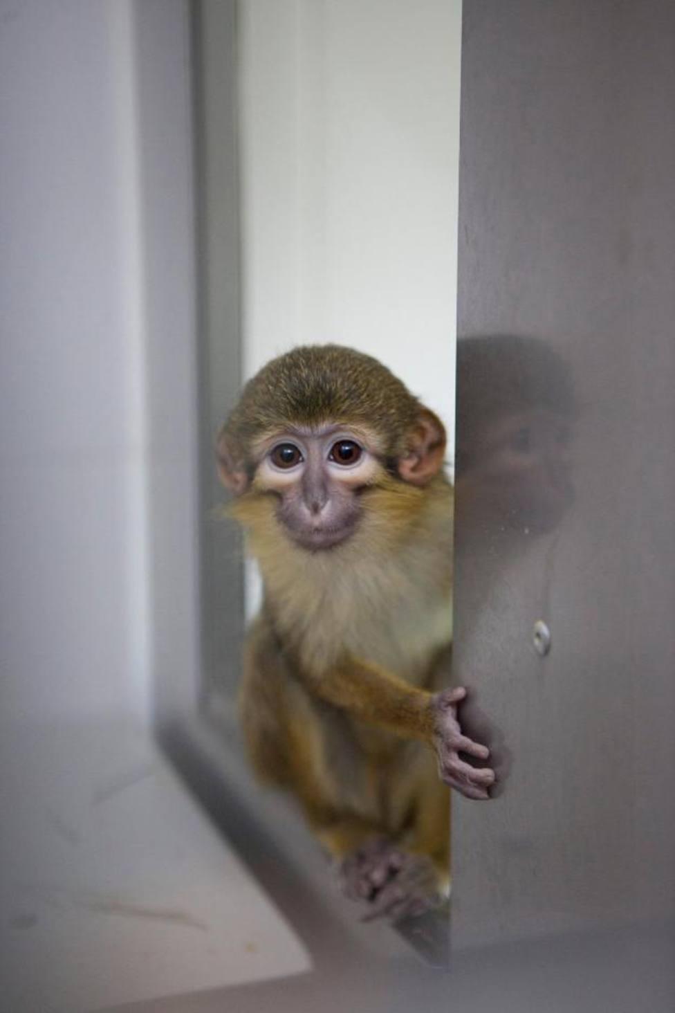 Un primate de Primadomus
