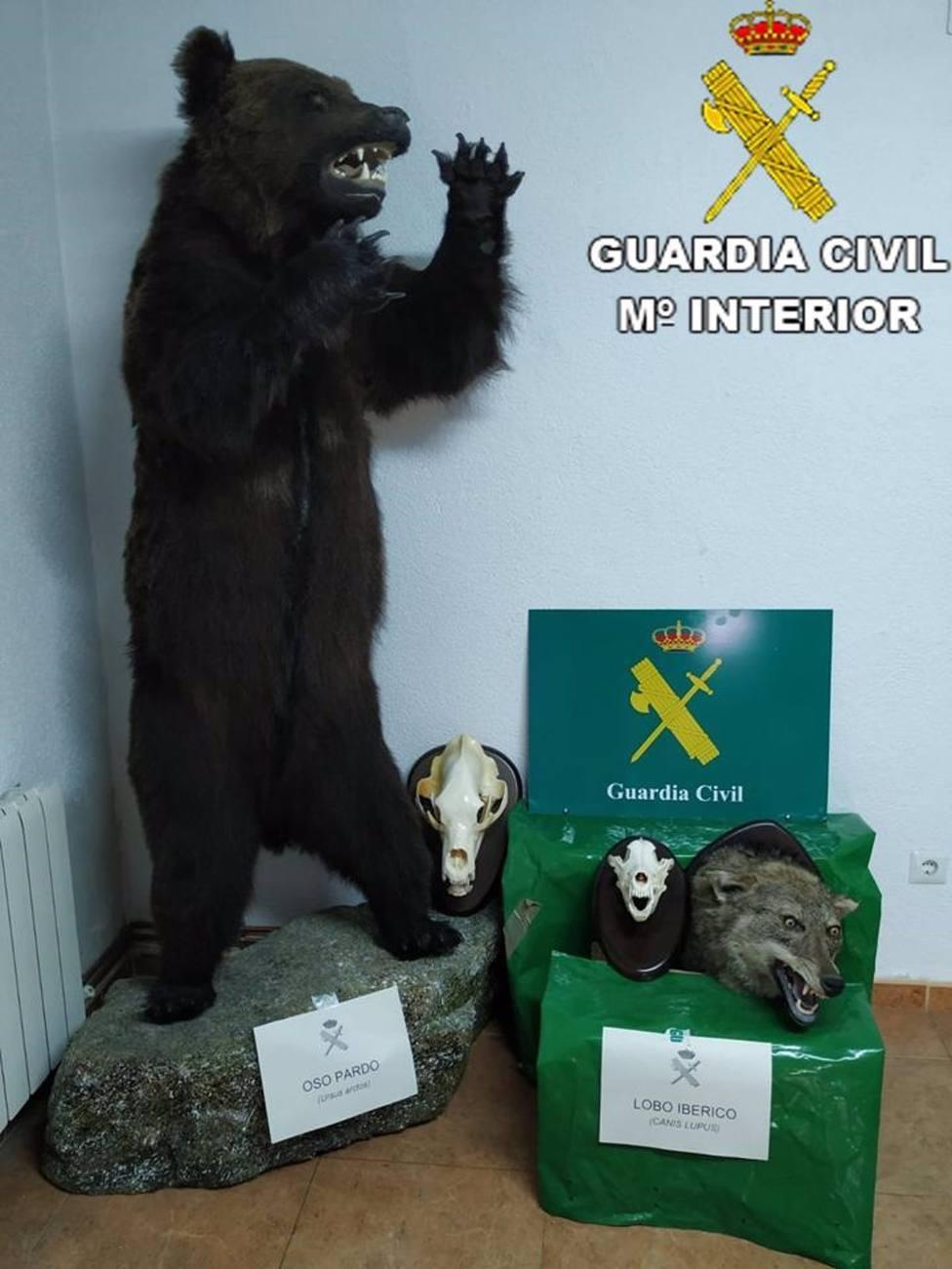 Sucesos.- Investigado en Burujón por tener en su casa un oso y una cabeza de lobo disecados y no acreditar su origen