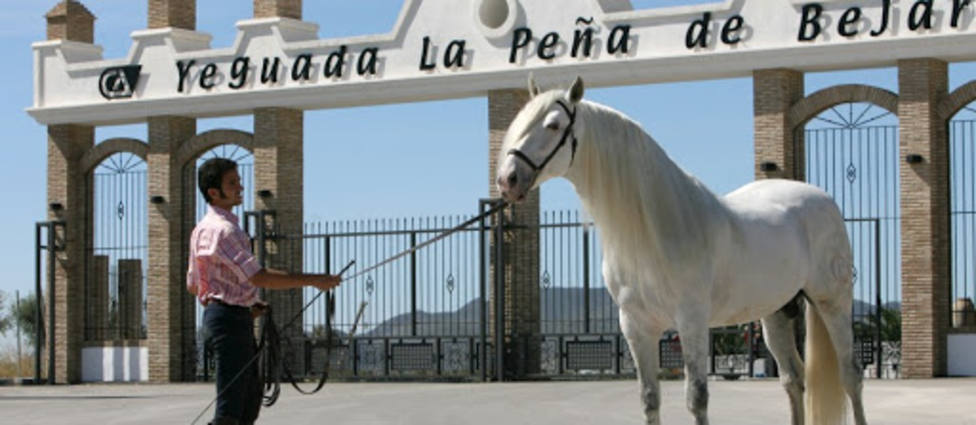 Salón del Caballo de Ifepa se traslada a una yeguada de Puerto Lumbreras