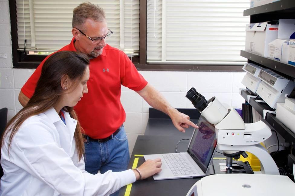Investigadores relacionan una enzima metabólica con la obesidad y la enfermedad de hígado graso