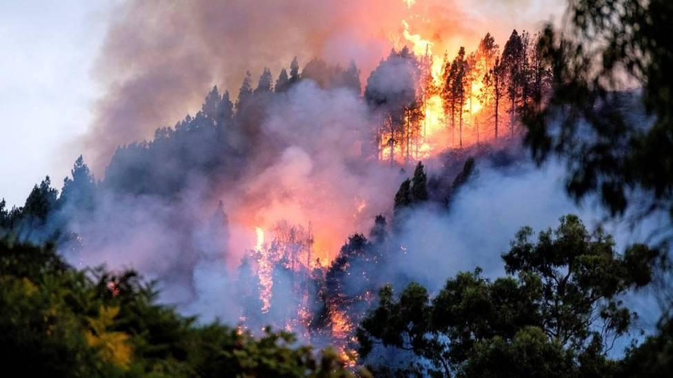 El incendio de Gran Canaria sigue arrasando hectáreas, mientras siguen activos los de Guadalajara y Ávila