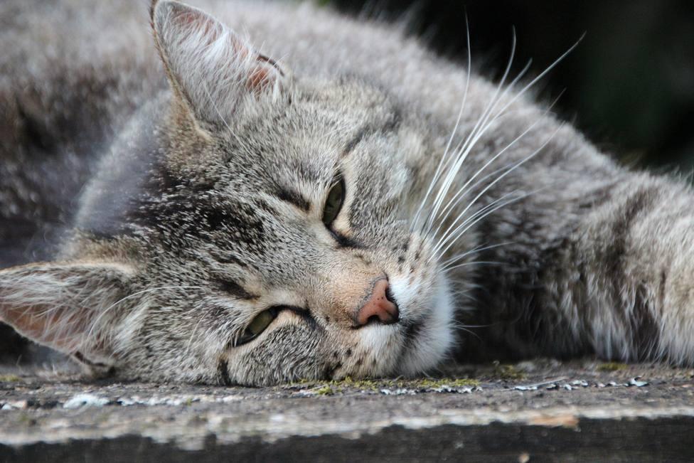 ¿Cómo sé si mi gato sufre estrés y cómo lo soluciono?