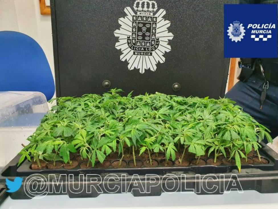 Interceptan en La Paz a un conductor que transportaba 150 plantas de marihuana
