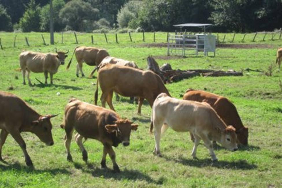 Reses de carne asturianas