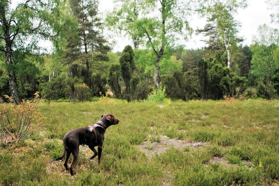 Perro suelto en un parque