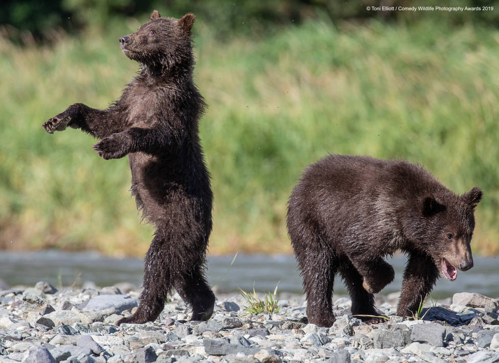 ctv-v9i-840915toni-elliott-grizzly-babies-00001296jpg
